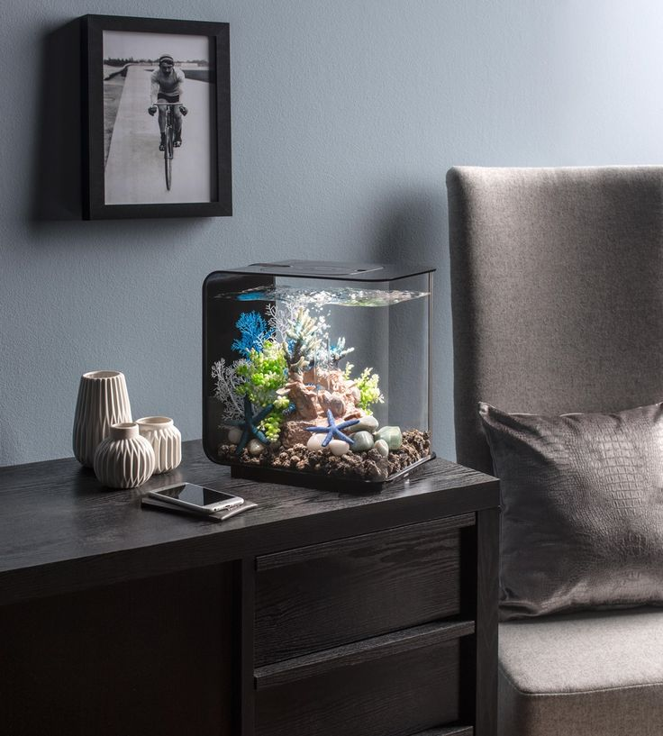 Een prachtige kleurencombinatie onder water in dit BiOrb aquarium. http://www.tuinexpress.nl/biorb-flow-aquarium-30-liter-mcr-zwart