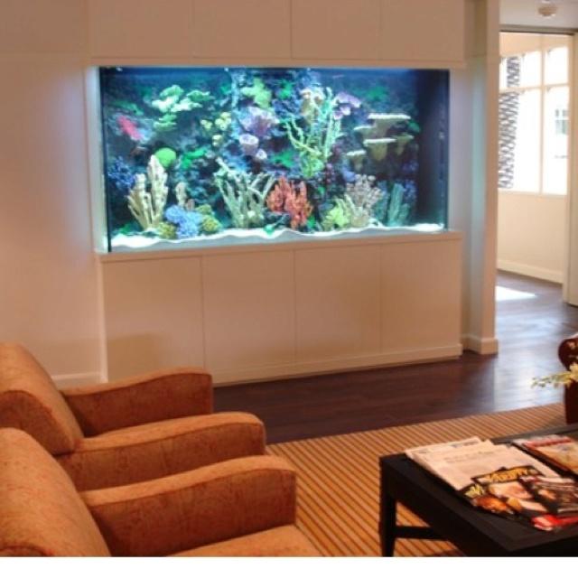 82 Best Images About Salt Water Aquarium On Pinterest