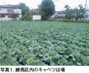 東京都 JA全農東京-月報 野菜情報−産地紹介−2014年5月