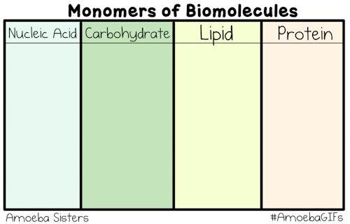 biological macromolecules post lab Food labs (biochemistry) biological macromolecules like proteins, lipids  virtual protein, carbohydrate, lipid lab tests.
