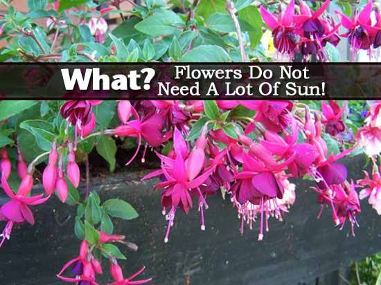 Plants That Do Not Need Sunlight What Flowers Do Not Need