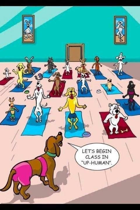 The best way to take care of your muscles after a long week of training is yoga and up-human..err.. I mean up-dog! #YogaHumor