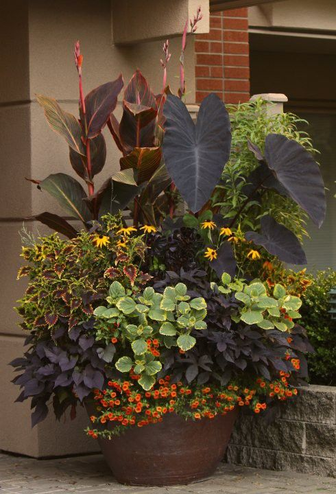 combo of flowers: Garden Container, Container Gardens, Elephant Ears, Container Planting, Container Plants, Container Gardening