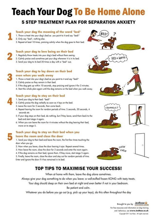Enseña a tu perro a estar solo en casa