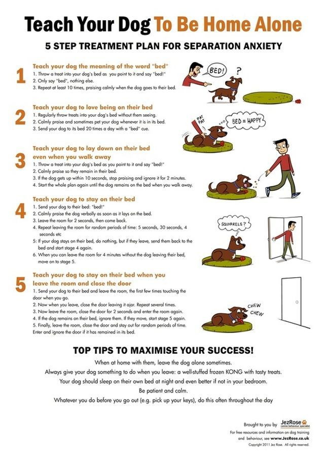 Need to train your dog! Check out this great Dog Training site - http://dogtraining-cxq26g74.popularreviewsonline.com