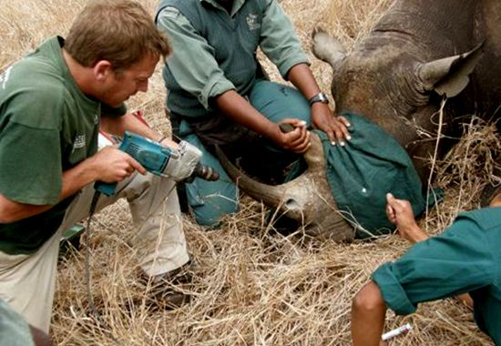 Wildlife ACT, South Africa