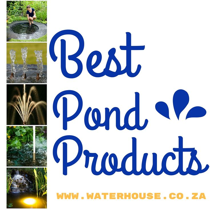 Ponds = happiness in our world!