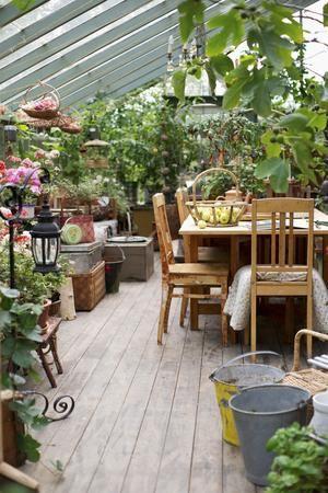 wintergarten bepflanzen tipps f rs dschungelfeeling unter. Black Bedroom Furniture Sets. Home Design Ideas