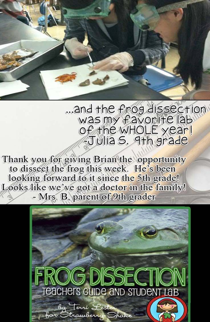 Frog dissection lab activity