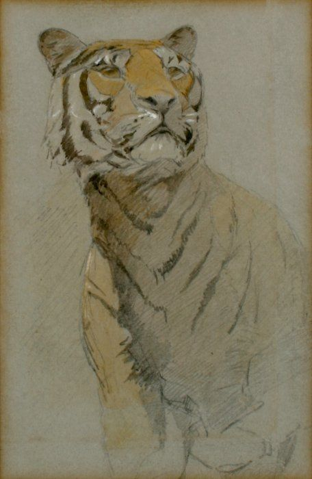Tiger sketches by John Macallan Swan [British,...