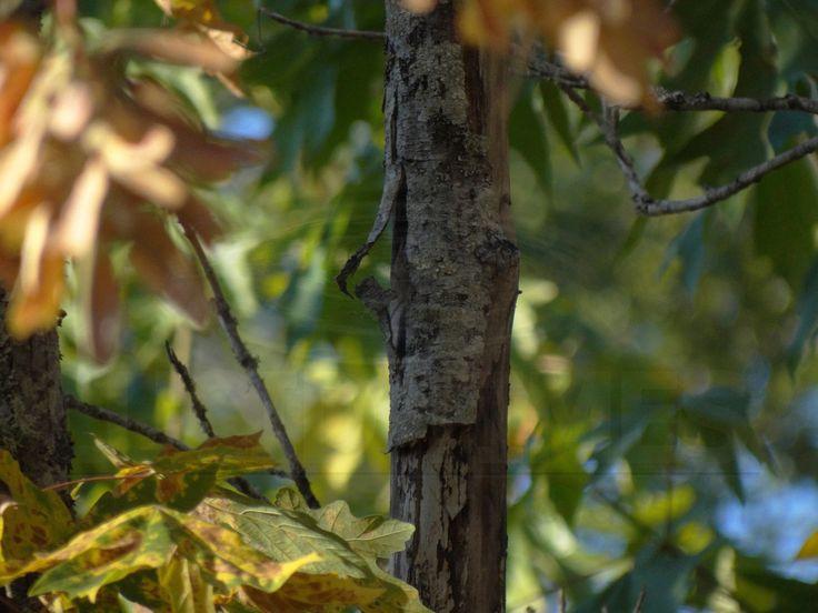 Burnt summer maple leaf mosaic