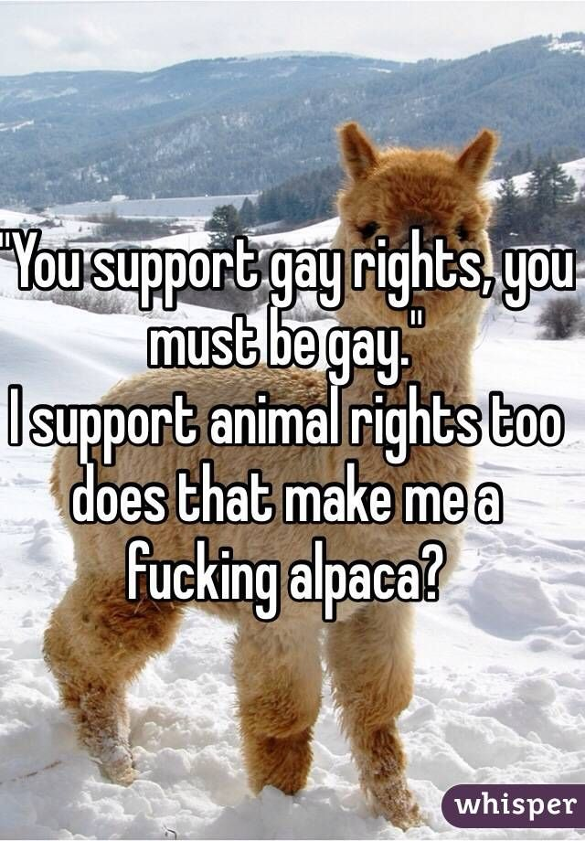 """""You support gay rights, you must be gay.""I support animal rights too does that make me a fucking alpaca?"""