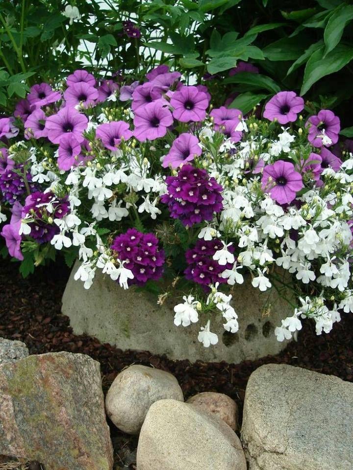 Una Nota De Color Colores Jardineria En Macetas Maceteros De