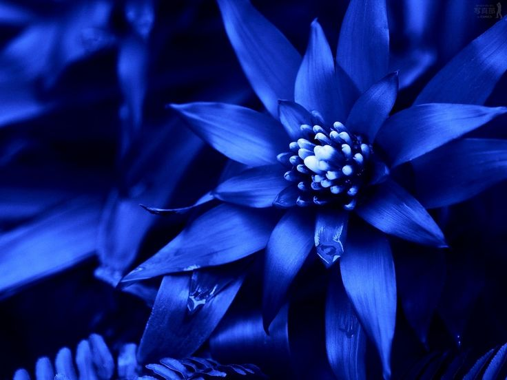 1000+ Ideas About Blue Flower Wallpaper On Pinterest | Blue Flower