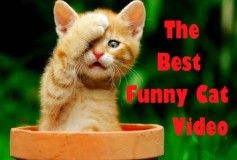 Funny Cat & Cute Kittens Fail Videos The Best Funny Kitty Cat Video № 24 | Morsomme Katter № 24