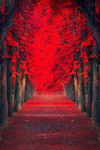 The red forest in Sintra, Portugal
