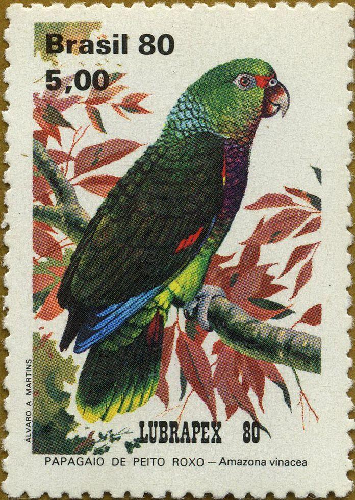 Fauna brasiñela: Loros Amazona vinacea Loro de cabeza roja 10-1980 Brasil