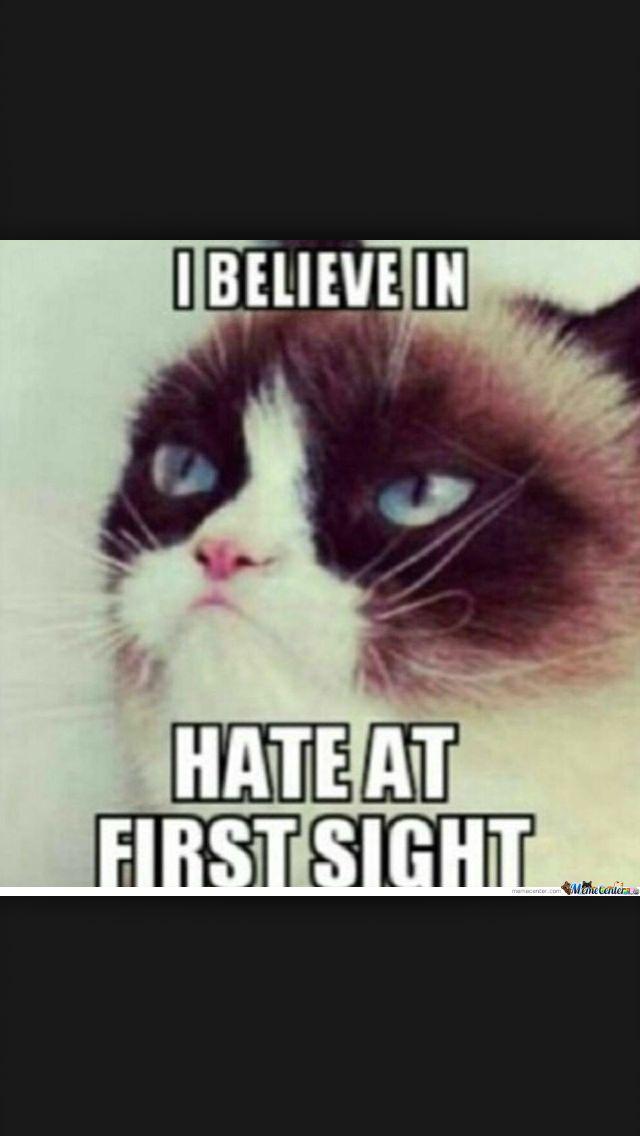 17 Best images about Grumpy cat! on Pinterest   Quokka ...