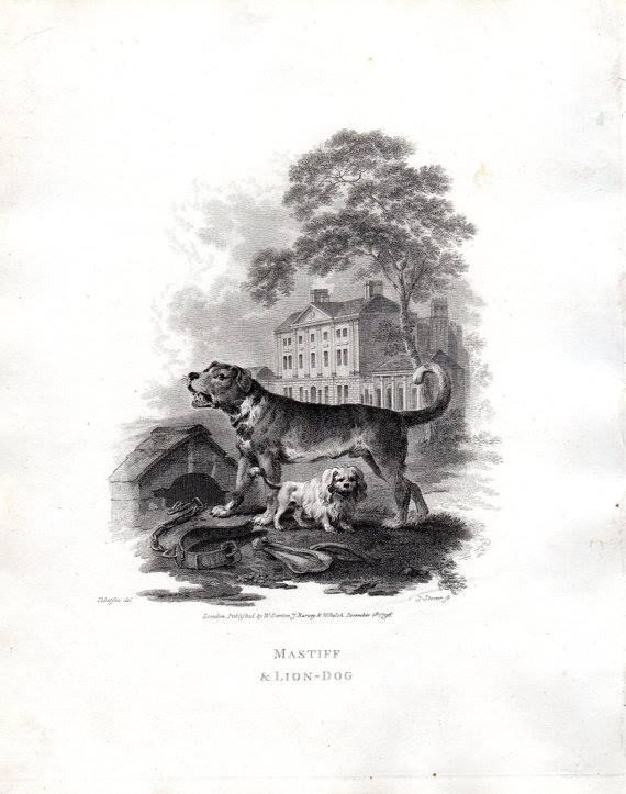Copperplate antique dog print of a Mastiff and a Lion Dog from 1805. John Church's Cabinet of Quadrupeds, published by W. Darton, J. Harvey & W. Belch, London (1805) Illustrations by Julius Ibbetson, Engraved primarily by J. Tokey