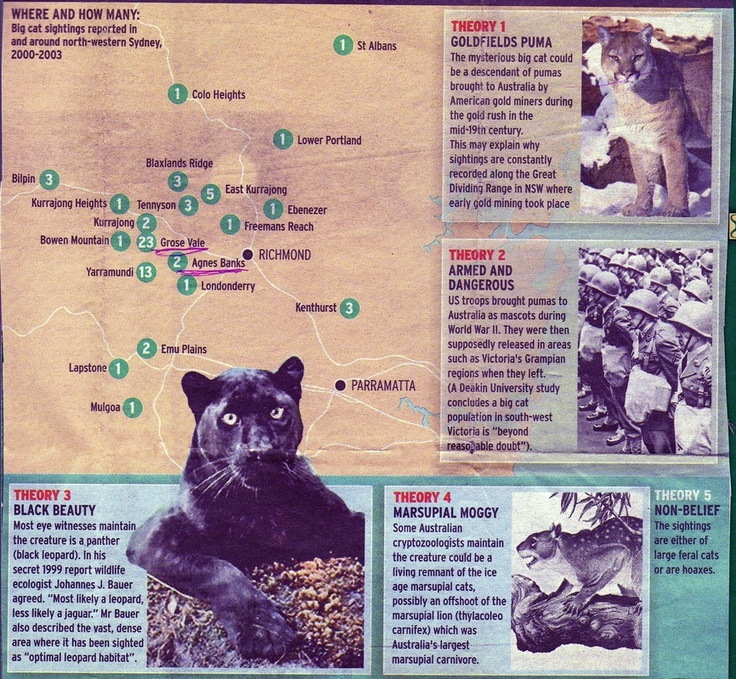 Alien Big Cats (Large already known  species of cats found in locations that are not their real habitats)