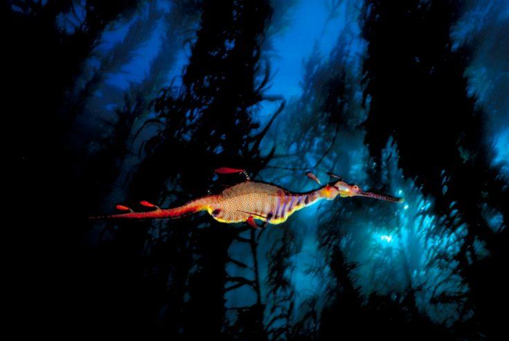 la fotografía submarina de David Doubilet