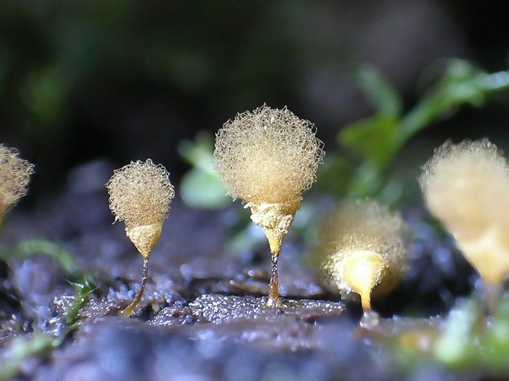 This shimmering, metallic structure isn't a new configuration of carbon nanotubes. It's actually a slime mold, which grows on dead plants. Not only does it look alien, but it has a very alien lifecycle. Individual slime mold cells can merge into one giant cell, up to 30 meters across.