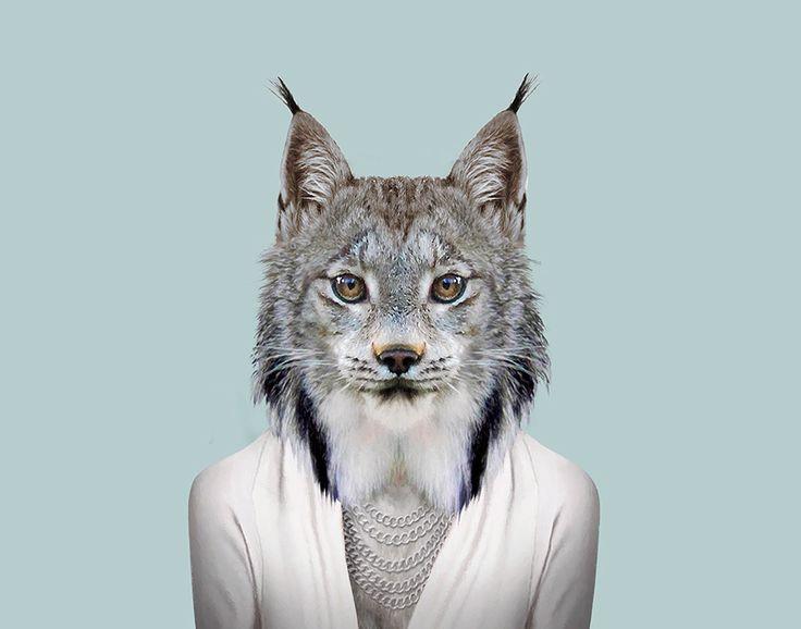 Canada-Lynx---Lynx-Canadensis
