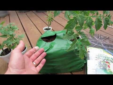 Grow Small Determinate Tomatoes in Small Containers and Coco Coir Grow Bags - The Rusted Garden 2013