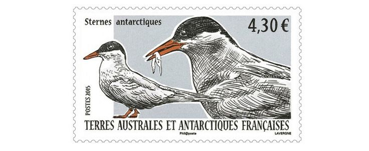 COLLECTORZPEDIA: TAAF Stamps Antarctic tern (Sterna vittata)
