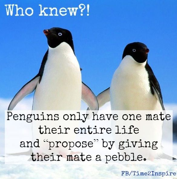 "Penguin love quote via ""Time 2 Inspire"" at www.Facebook.com/Time222Inspire"