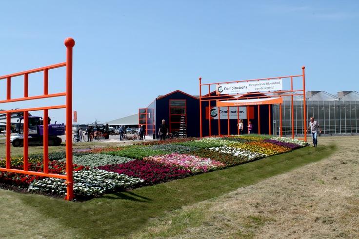 Grootste bed van de wereld  Flowerbed  Flowers  Guinness World Record    www.combinations.eu