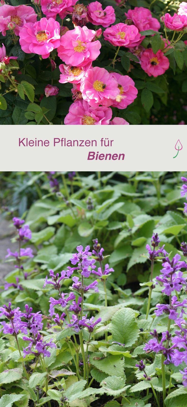 Kleine bienenfreundliche Pflanzen, die Bienen lieben und die in jeden Garten, auf jede Terrasse oder Balkon passen.