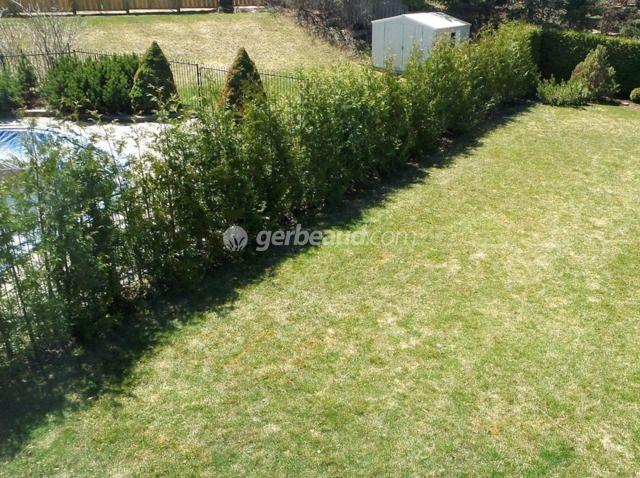 arbuste couvre sol croissance rapide au gazon couvresols pour remplacer la pelouse with arbuste. Black Bedroom Furniture Sets. Home Design Ideas