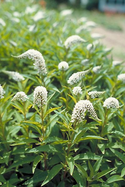 Get rid of invasive plants and let your garden breathe.