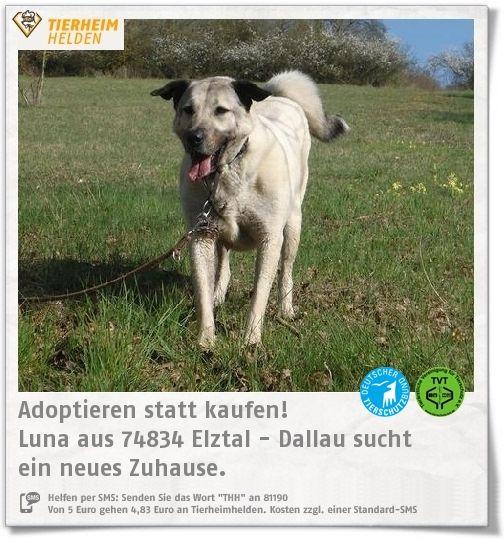 Für Luna werden im Tierheim Dallau Interessenten gesucht, die sich mit Herdenschutzhunden auskennen.  http://www.tierheimhelden.de/hund/tierheim-elztal_dallau/kangal/luna/3365-0/  Für Luna muss ein gesichertes Grundstück zur Verfügung stehen, welches nicht versehentlich von Fremden betreten wird. Trotzdem ist Familienanschluss nötig, denn sie ist verspielt, verschmust und anhänglich.