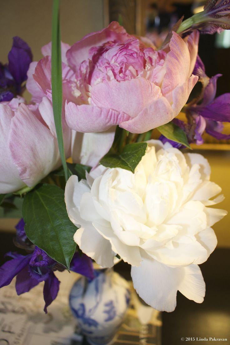 peonies and iris, 2015