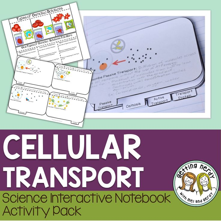 Osmosis Diffusion Science Interactive Notebook for Biology contains activities for teaching how cells move materials across the cell membrane. Students will learn about active transport, passive transport, osmosis, transport proteins, endocytosis, exocytosis, and osmotic solutions: hypertonic, isotonic, and hypotonic.