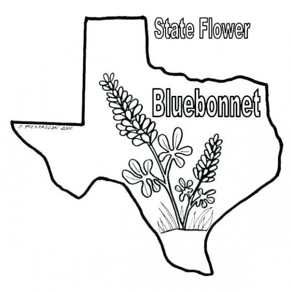 Bluebonnet Coloring Page Free Blue Bonnets Flag Coloring Pages