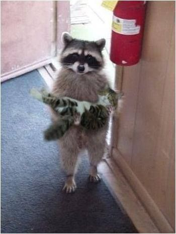 Delivery service by a raccoon!  (Has to be  a tamed raccoon but don't try this at home!)