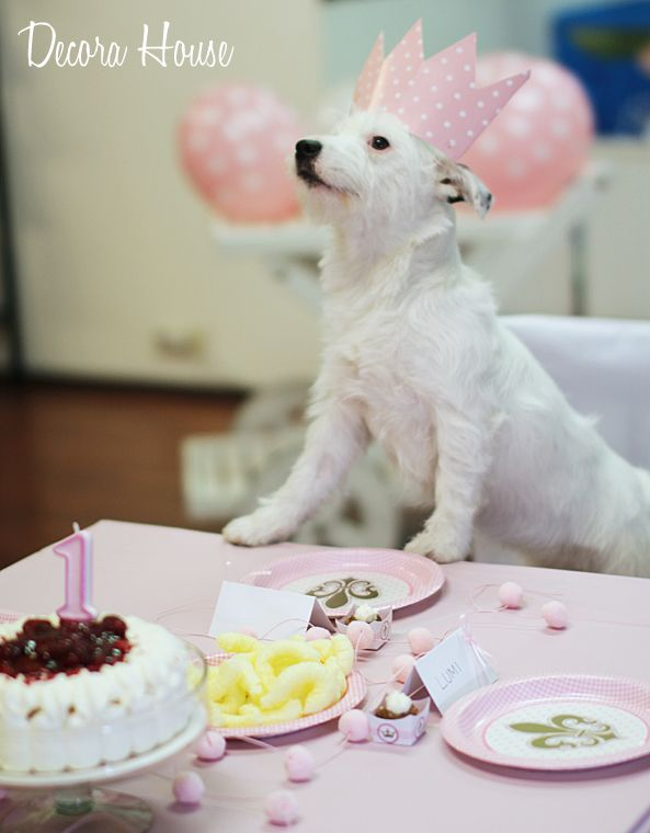 Doggy Birthday Party! How cute, isn´t it? #dogbirthdayparty #doggyparty #partyideas