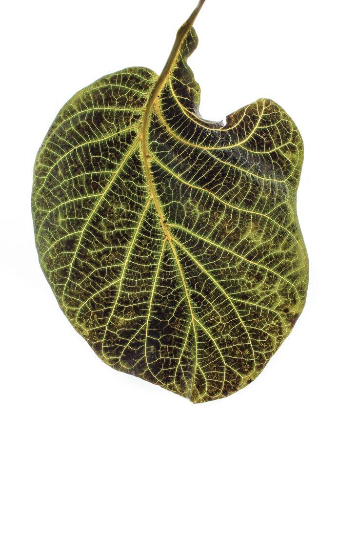 fractales- a veces nos puede parecer que la naturaleza es un conjunto de sistemas arbitrarios y caóticos pero bajo esta apariencia agreste existen patrones asombrosos hay orden subyacente en sus diseños y belleza derivada de ese orden una rama de un abeto es una abeto en miniatura, pero también se parece a la distribución de los bronquios, bronquiolos y alvéolos pulmonares las imágenes de los relámpagos son similares al diseño del sistema nervioso, pero también a las raices de los árboles...