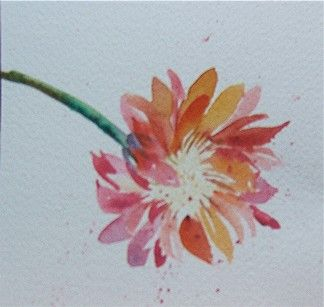 Watercolor Aster...would be great for my next tattoo!  check out my website www.mstephan.myitworks.com