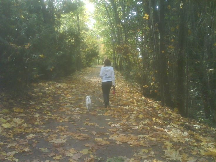 Walking with my dog; leafy lane, fallen maple leaves and dappled sun - Peaceful