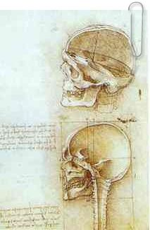 Two Views of the Skull by Leonardo da Vinci