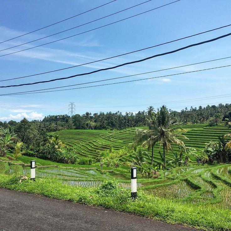 The mix of modern & traditional is so obvious in Bali & to me it only makes the culture more fascinating as the Balinese navigate their way through with acceptance, grace & a sense of humour. . Powerlines in the paddies.
