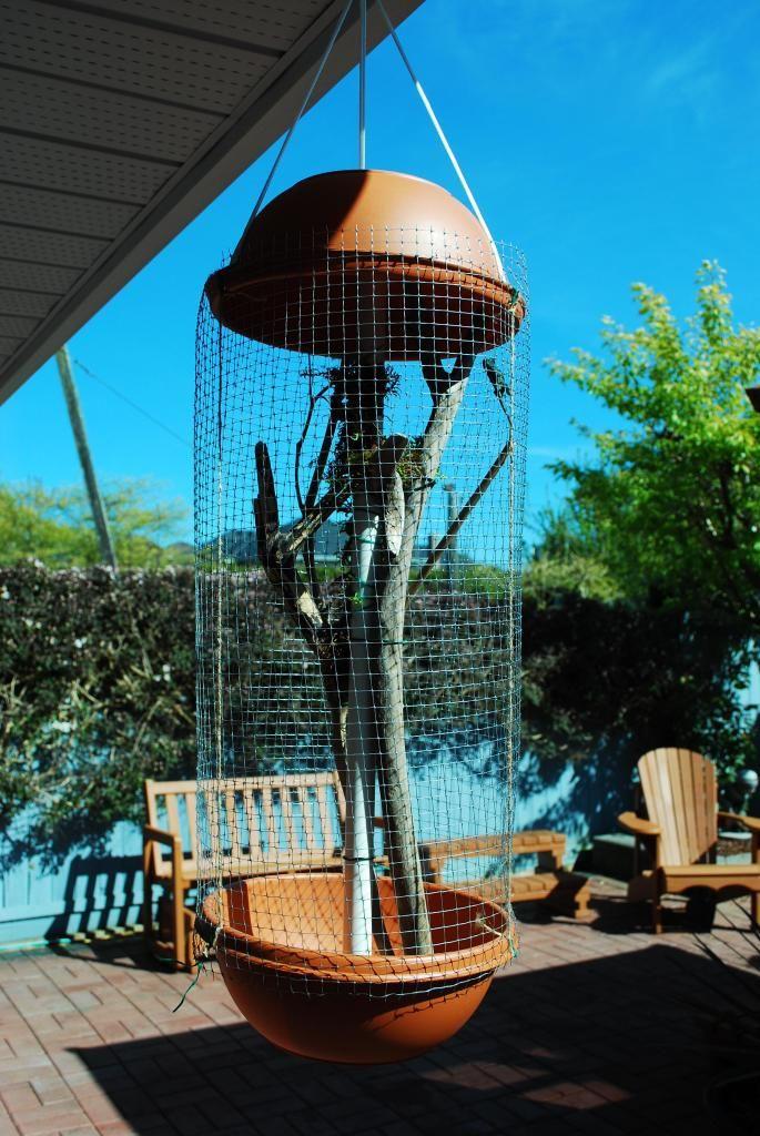 DIY Outdoor Enclosure [Pictures] - Chameleon Forums for lizards /chameleons