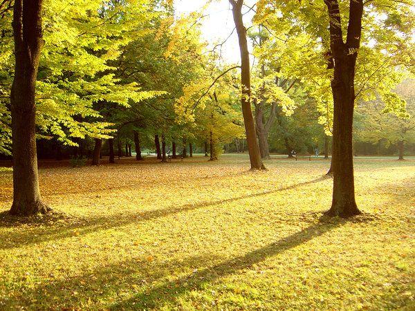 park in Autumn   by dolar