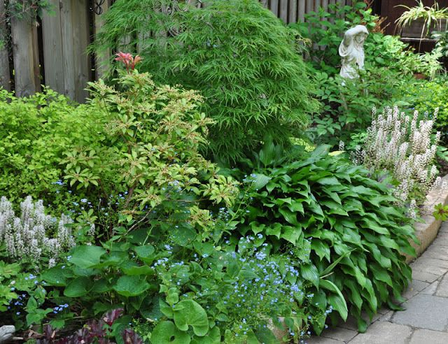 The plantings along the pathway include (starting along the top row on the left) a spirea, a Pieris Japonica, and a Japanese Maple. In the lower row there is also a hosta with spear-shaped foliage and two white Foam Flowers, Tiarella cordifolia.