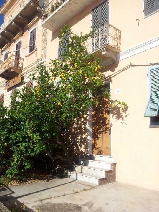 a lemon in La Maddalena Italy