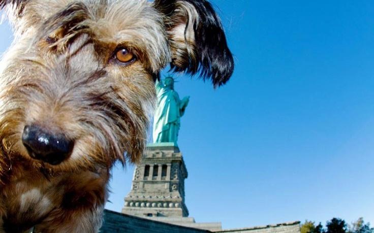 Oscar in NY!